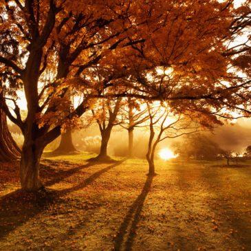 Farbenfrohes Fotografieren im Herbst