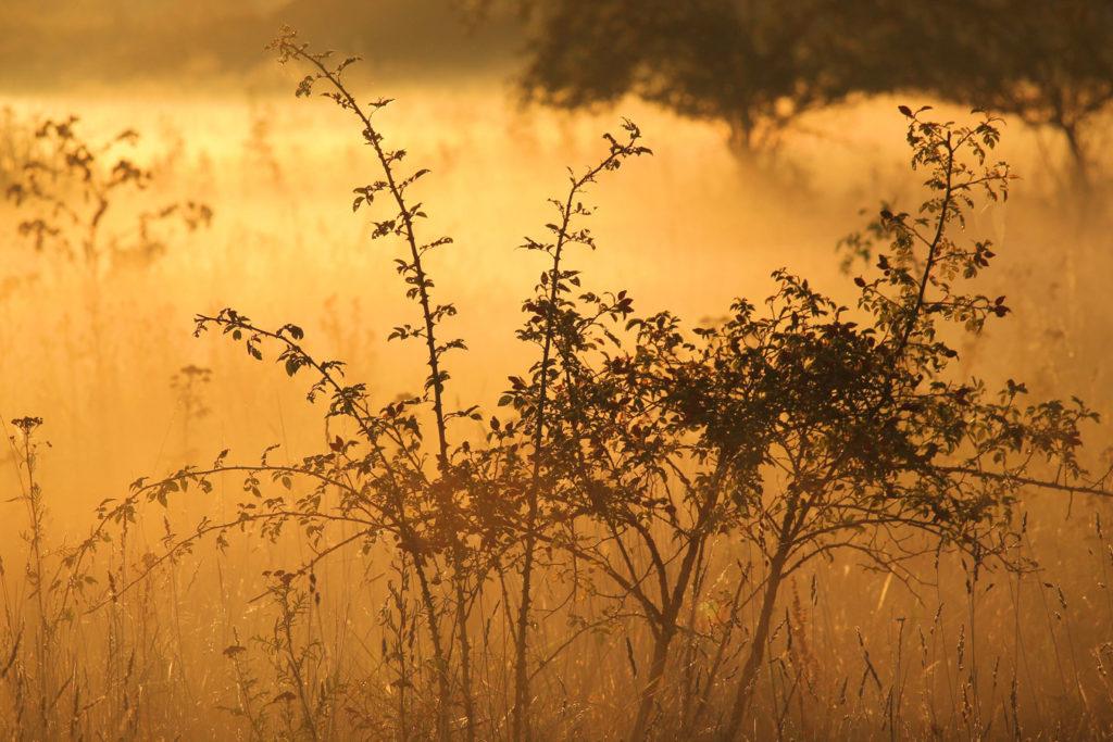 Nebel Fototipps printolino