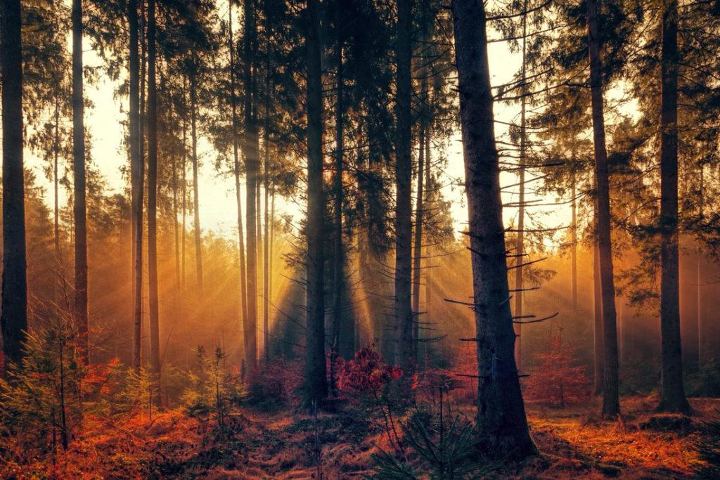 Fototipps für Herbst printolino